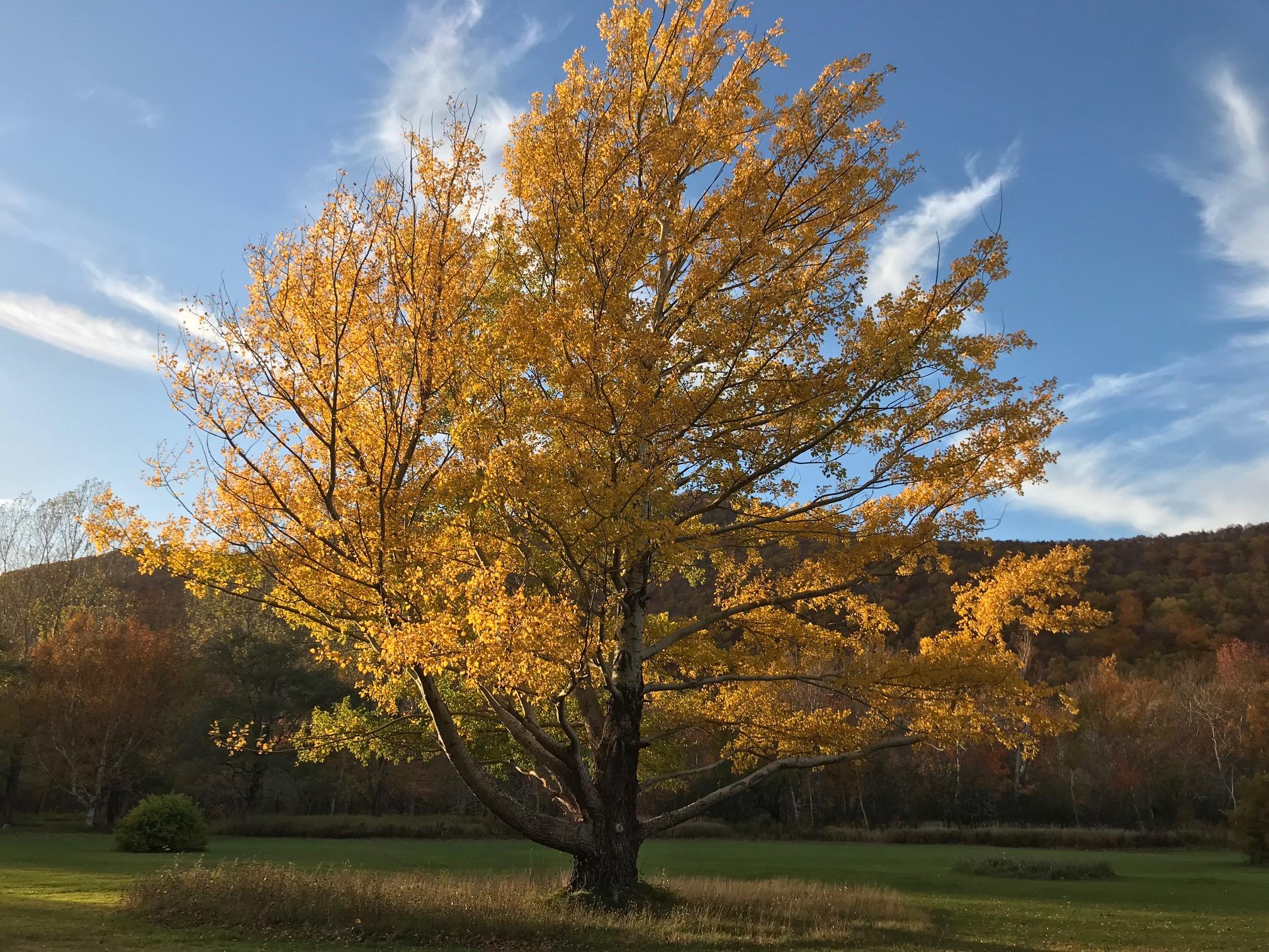KV fall tree