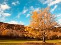 KV Fall colours