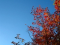 kv_20red_20tree_20blue