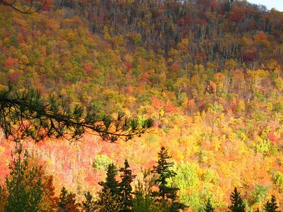 Fall Gold at the Valley