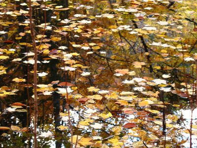 kv_20leaves_20on_20pond